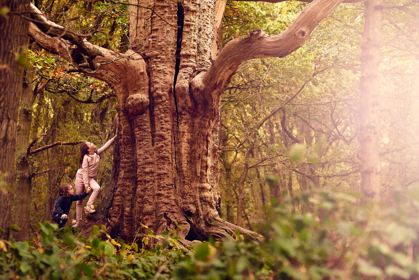 Kids climbing trees at a park in Essex